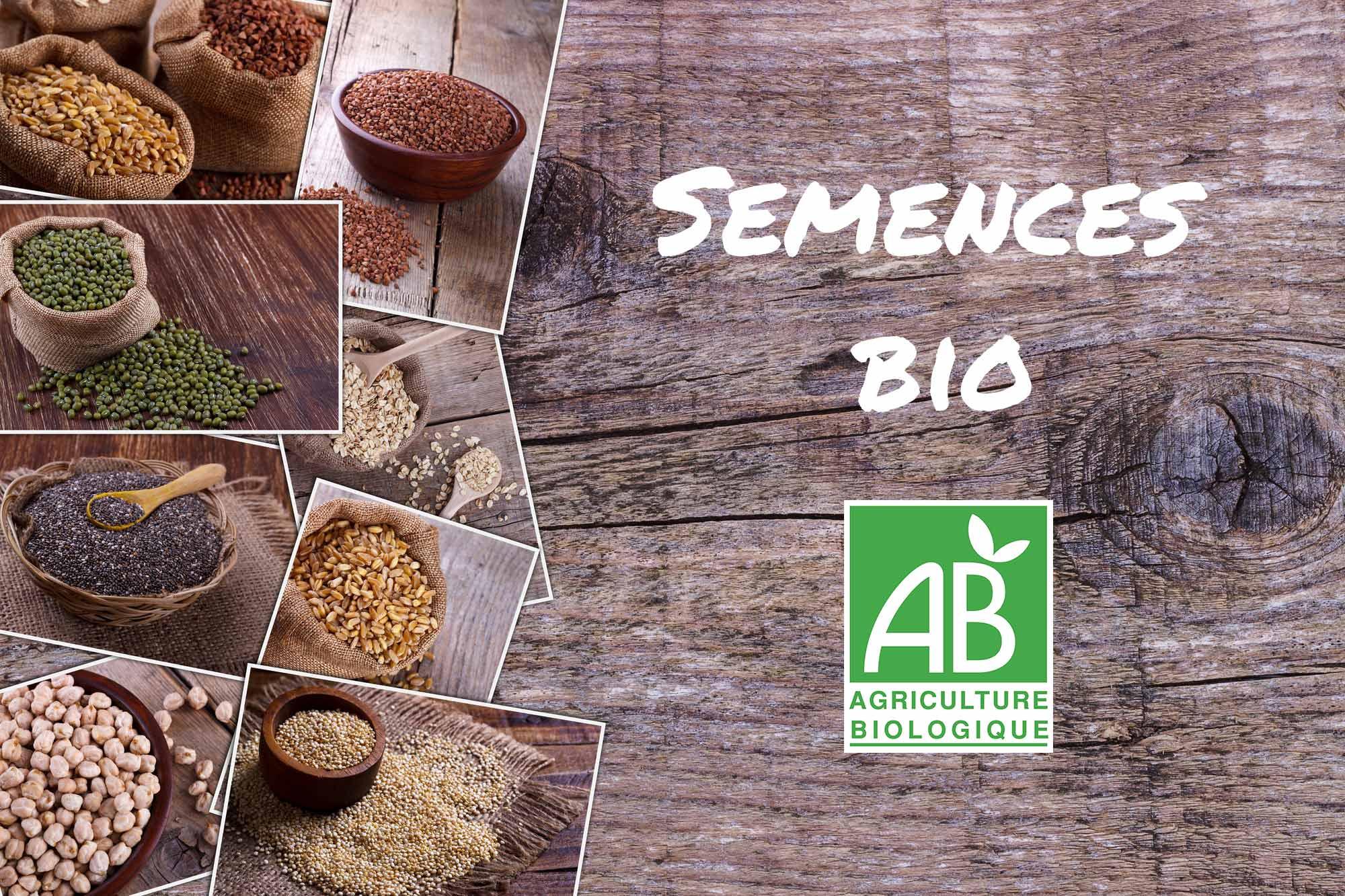 achat de graines bio